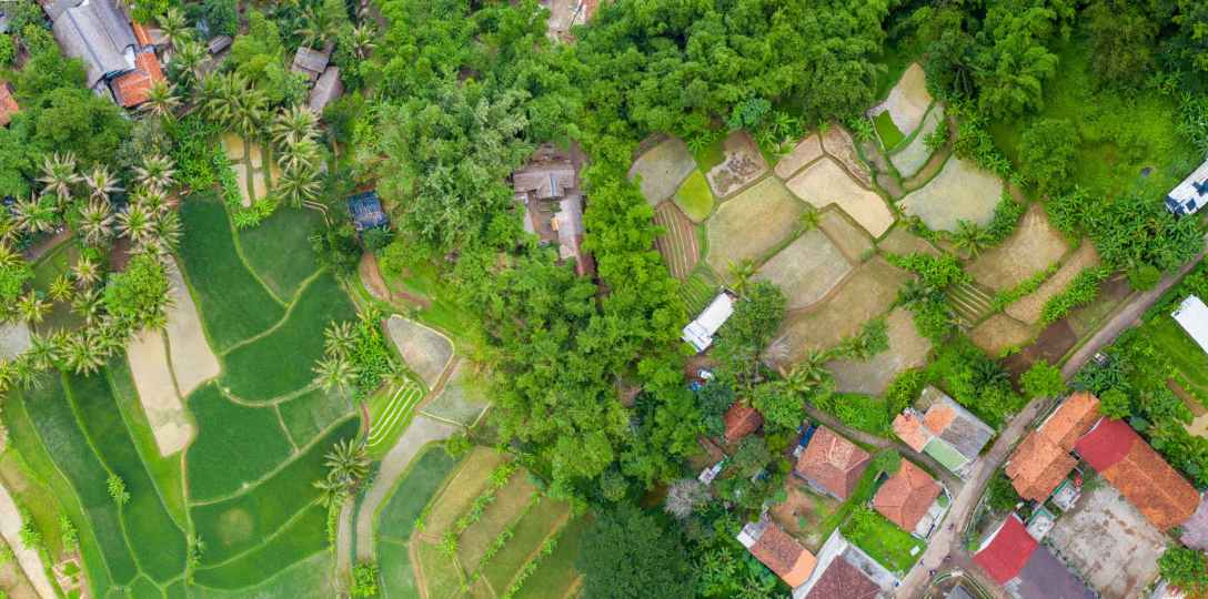 Aerial view of rice fields with houses